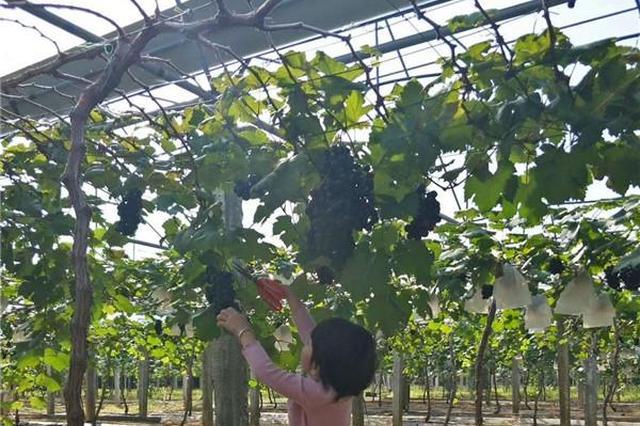 东方兴建果品采摘园 促进农旅业融合发展
