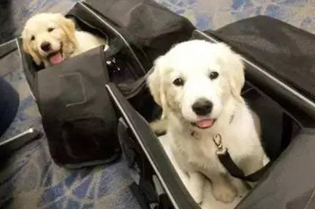 海航试行新规客舱可运输宠物 每只收费800元