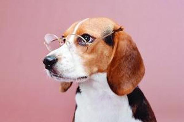 """你家的狗办证了吗?海口狗狗的""""上户口""""流程来啦!"""