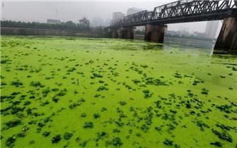 汉江现大量浮萍 如披绿纱