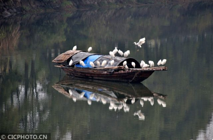 宜昌:生态向好引鸟归