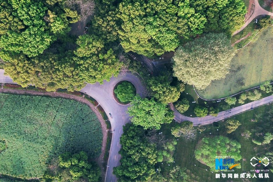 航拍武汉东湖听涛景区 春色盎然湖光秀美