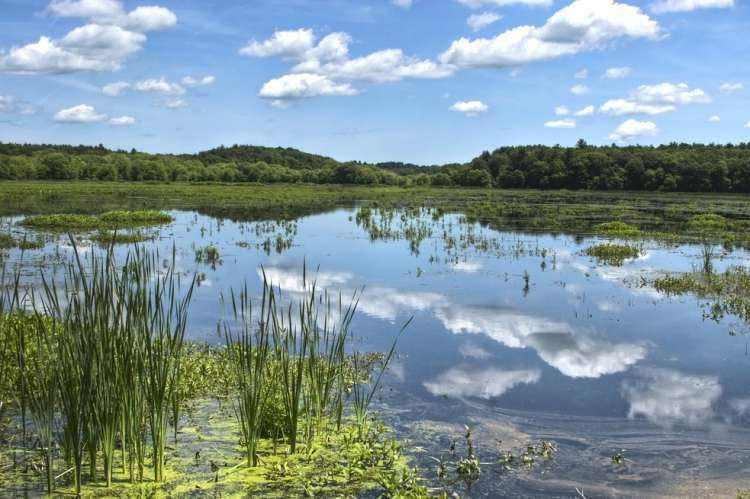 长江湿地面积锐减 五省全国政协委员联名吁立法保护