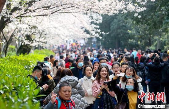 图为医护人员们在樱花树下欢笑 张畅 摄