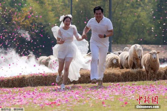 资料图:泰国新婚夫妇举办特色婚礼。