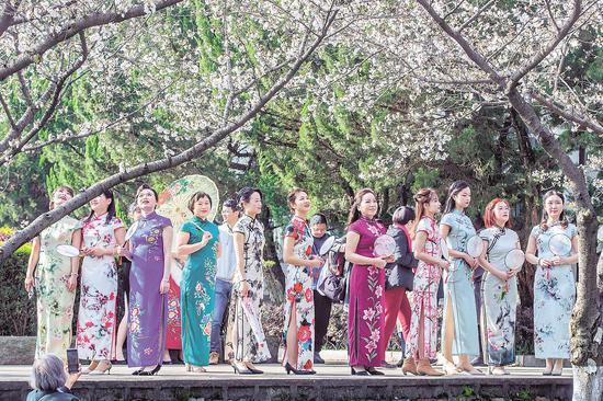 """3月4日,武汉大学樱花悄然绽放。樱花树下,一群身着旗袍的曼妙女子在赏樱花、拍写真,她们是中建三局总承包公司参加""""两山""""医院建设的铁娘子。脱下工装、换上旗袍,用特有方式提前庆祝三八妇女节。""""两山""""医院建设期间,铁娘子们遗憾地错过樱花,今年该局认真组织,圆大家赏樱心愿。 (湖北日报全媒记者 梅涛 通讯员 吴渊 周燕妮 摄)"""