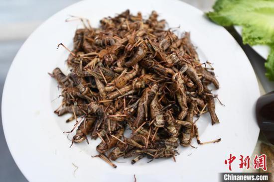 学生烹饪的昆虫美食 刘涛 摄