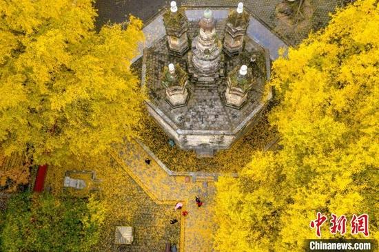 2021-10-25拍摄的位于襄阳市襄城区广德寺院内古银杏树(资料图) 杨东 摄