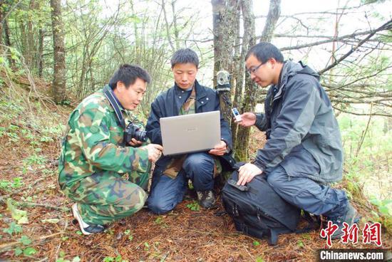 神农架研究人员开展野外金丝猴观测记录工作。 受访者供图
