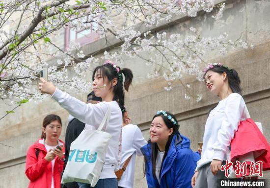 图为医护人员们在樱花树下拍照 张畅 摄