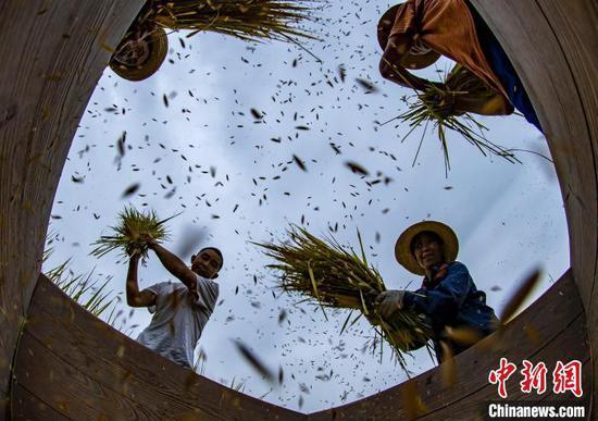 农民进行水稻收割、搬运、贮藏,确保秋粮颗粒归仓。 郑家裕 摄