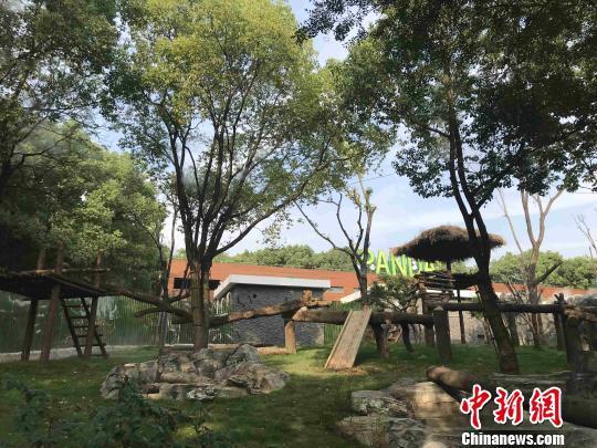 武汉动物园大熊猫新馆 张芹 摄