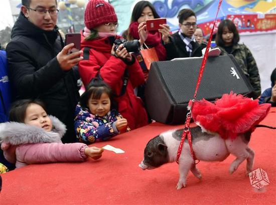 村旅游受热捧,农事活动有趣味-武汉成全国十大客源地之一 元旦347