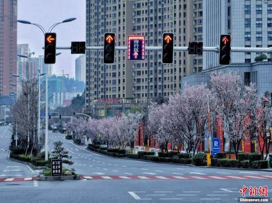 资料图:3月1日,宜昌路边的红叶李花开得正好。 鸿雁 摄