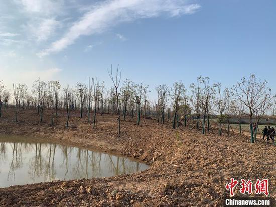 青山北湖长江森林示范林现场图 武汉市园林和林业局供图