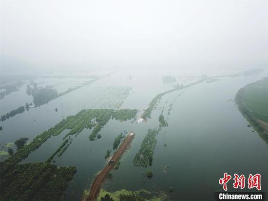 强降雨致湖北阳新富河一堤段出现溃口,淹没周围农田(资料图) 余凯 摄