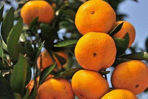 慢性肾衰竭爹爹1斤柑橘下肚 突发高钾血症险丢命