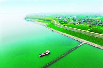 整治后的荆江岸边护坡绿意盎然     通讯员陈宇 摄