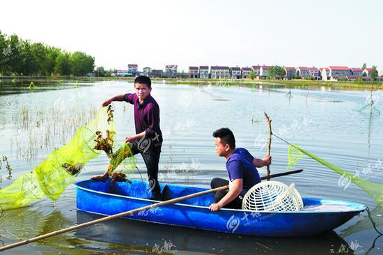在荆州沙岗镇,工作人员划着小船在湖里捞虾。