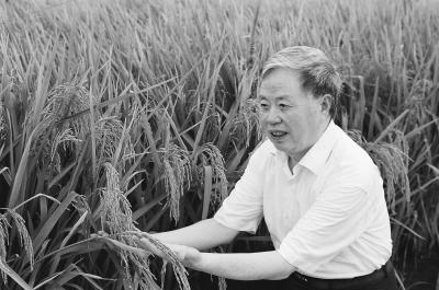 """被誉为""""水稻大师""""的中国工程院院士朱英国生前资料照 。通讯员吴江龙提供"""