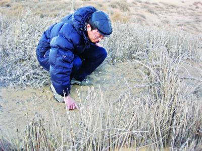 2008年12月,中科院武汉水生所专家刘永定实地观察荒漠藻结皮效果记者 胡冬冬 翻拍