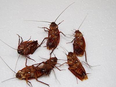 单身女租房身陷蟑螂屋 清洁数次未果女子被吓傻(图)
