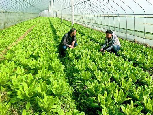 提高新型职业农民增收能力