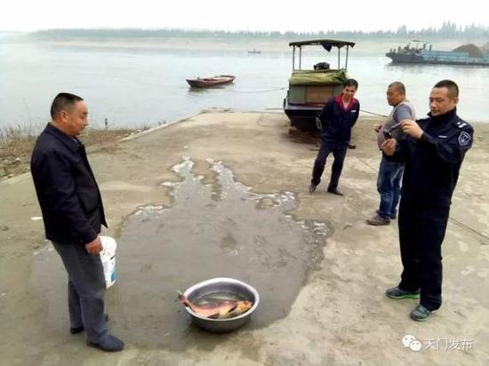 这条胭脂鱼重约8斤,体长60厘米左右。在对鱼的健康状况进行检查后,渔政执法人员和渔民一起将胭脂鱼放归汉江。