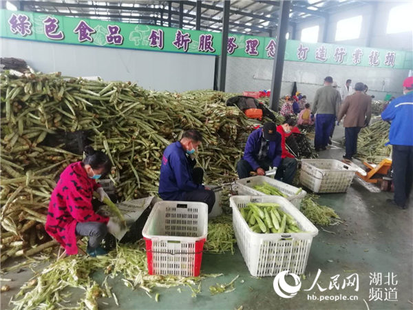 """全国""""拼单""""湖北农产品 50万吨积压蔬菜已清零"""