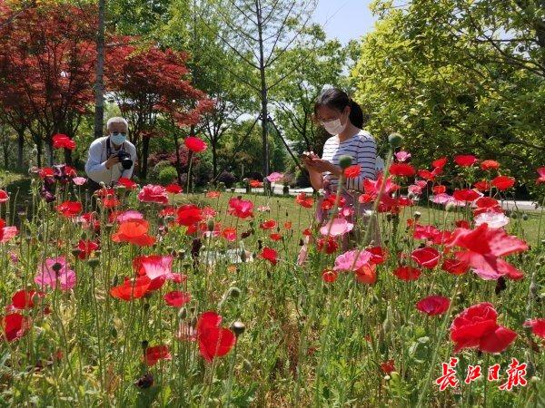 市民免费畅游园博园 记者杨涛 摄