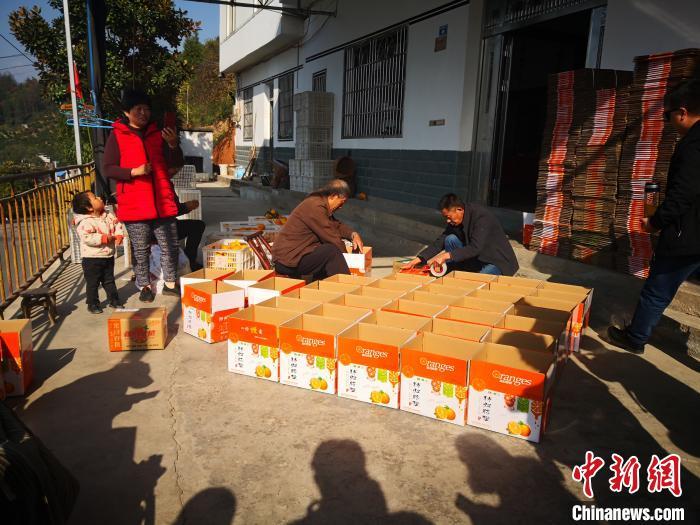 图为农民在为电商的脐橙装箱 刘亮 摄