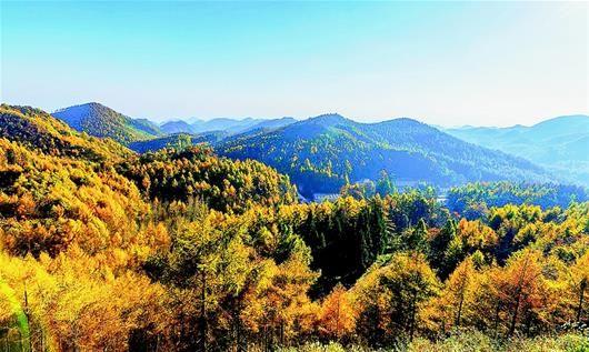 图为:建始县长岭岗林场醉人的秋色美景。(视界网向登本摄)