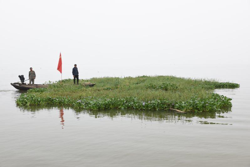 因水草能挡一定的风浪,为了保护湖堤,三八湖堤驻守的村民根据经验,把湖中的蒿草排拉至岸边。 董悦、朱清元 供图