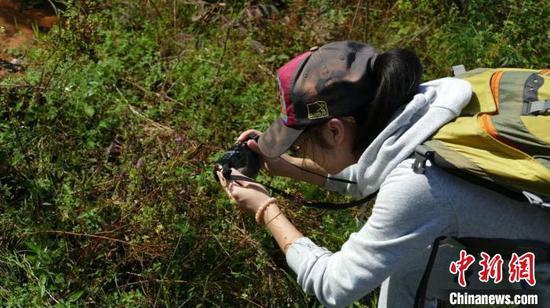 白文婷在野外拍摄记录植物。受访者 供图