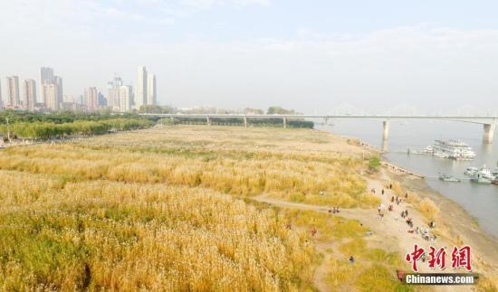 资料图:市民在武汉汉口江滩上游赏。中新社记者 张畅 摄