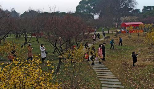2019年2月4日农历除夕这天,东湖梅园的白梅、黄梅、红梅、绿梅竞相开放,香气袭人,吸引很多市民前来赏梅拍照。记者杨涛 摄