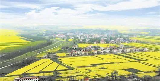 (美丽的潜江新农村 图片来源:湖北日报)