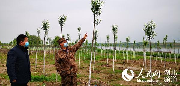 武汉长江大保护植树造林复工 将植树40万株