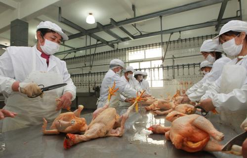 武汉发布活禽定点屠宰交易市场建设标准