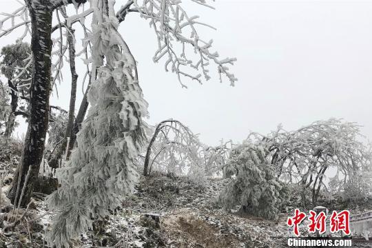 牛庄乡现迷人雪景。 周祖熙 摄