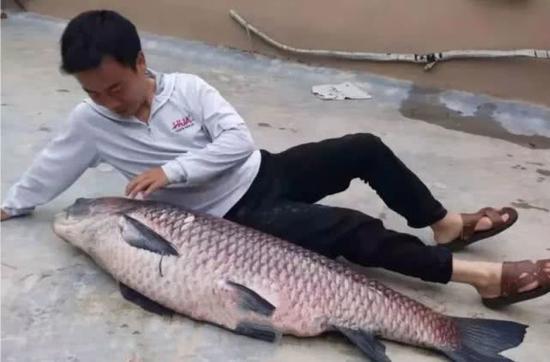 王先生和他钓上的大青鱼
