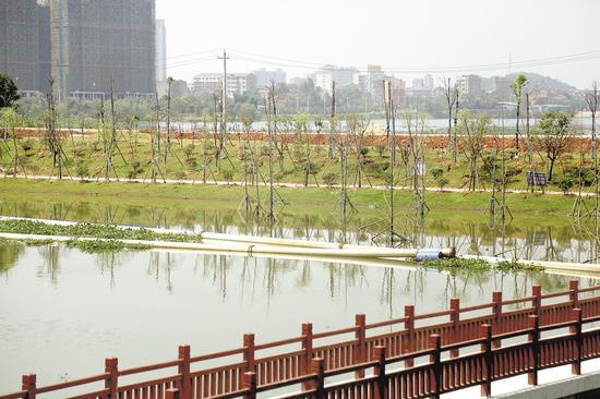 正在整治中的小湖。(嘉鱼县委宣传部供图)