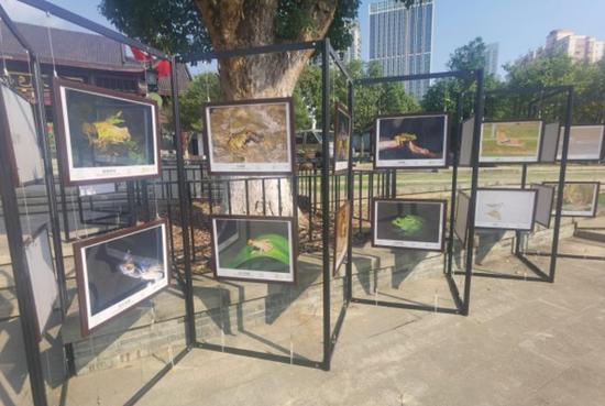 沙湖公园野生小伙伴摄影展。 詹丽 摄