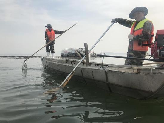 湖泊养护人员正在水面清理水葫芦、拆除渔民私设地笼残网 黄师师摄