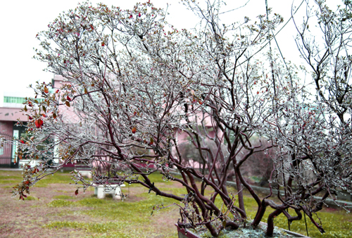 受冷空气影响雨夹雪袭击孝昌。