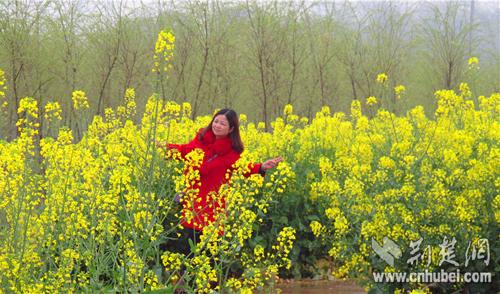 蕲春乡镇油菜花吸引游客拍照