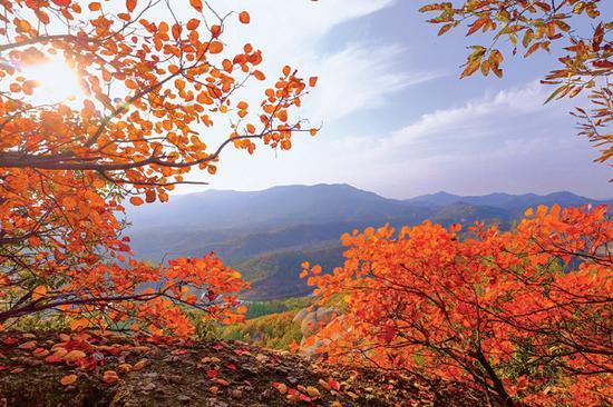 铁寨漫山红叶