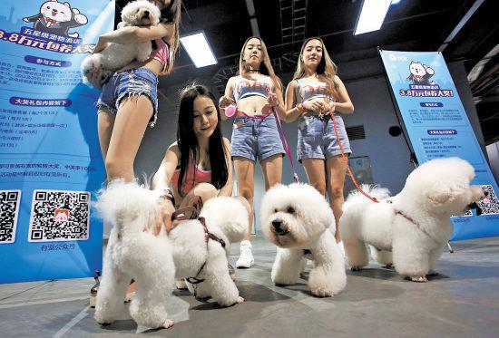 除观赏宠物比赛,与宠物互动等趣味环节之外,最能吸引广大宠物主的应该