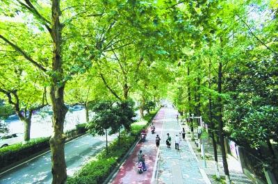 青山区和平大道非机动车道和人行道上两行法桐与一行水杉形成的林荫道  记者李永刚航拍