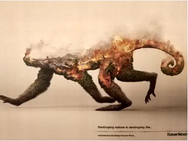 Disappearing Animals系列展品图之一